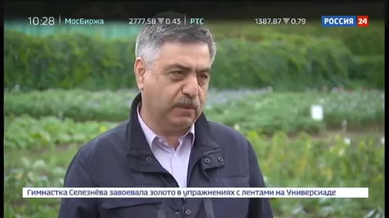 Пчелы гибнут за капитал_ кто ответит за бесконтрольную травлю насекомых - Россия
