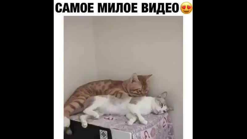 няшности )