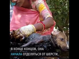 Щенков спасли после того, как они угодили в смолу
