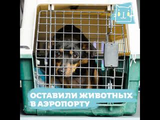 Аэрофлот отказался перевозить домашних животных из Шанхая в Москву