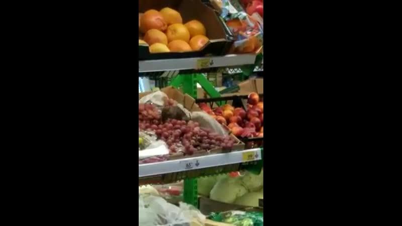 В год крысы - Крысам можно все 😡