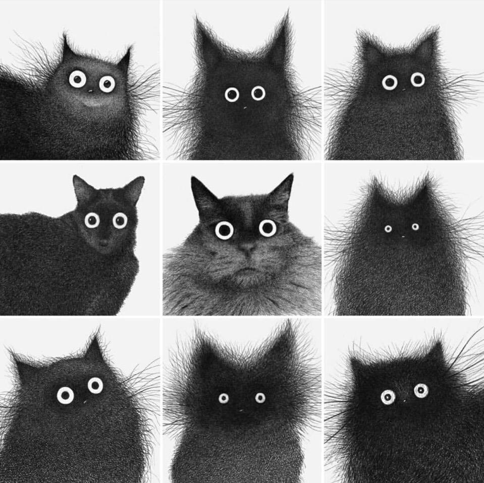 Какой ты котик?