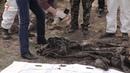 Убитых в ДНР, ЛНР военных наемников закапывали местные как собак. Эксгумация.