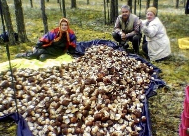 Кажется, в Сокольском больше нет грибов. Все собра...
