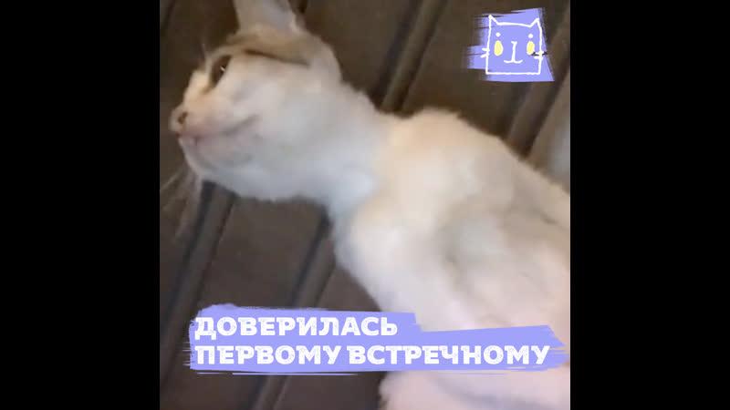 Ласковая беременная кошка доверилась незнакомому человеку