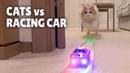 Коты против Гоночной Машинки / Cats vs Racing Car