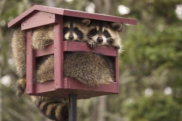 Доступное жилье для молодой семьи. (источник: gofazenda)