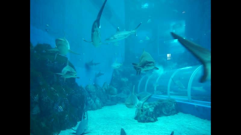 Океанариум Сентоза Сингапур S E A Aquarium Sentosa Singapore