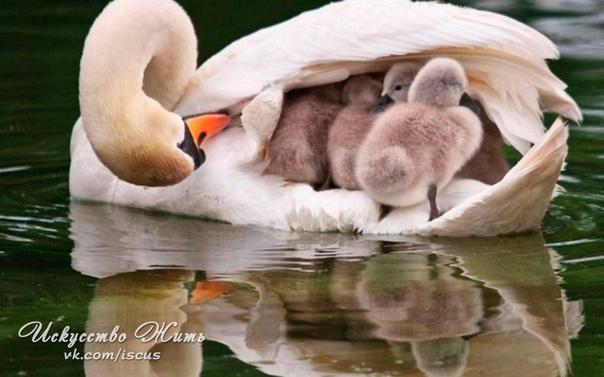 Любая хорошая семья - это следствие заботы друг...