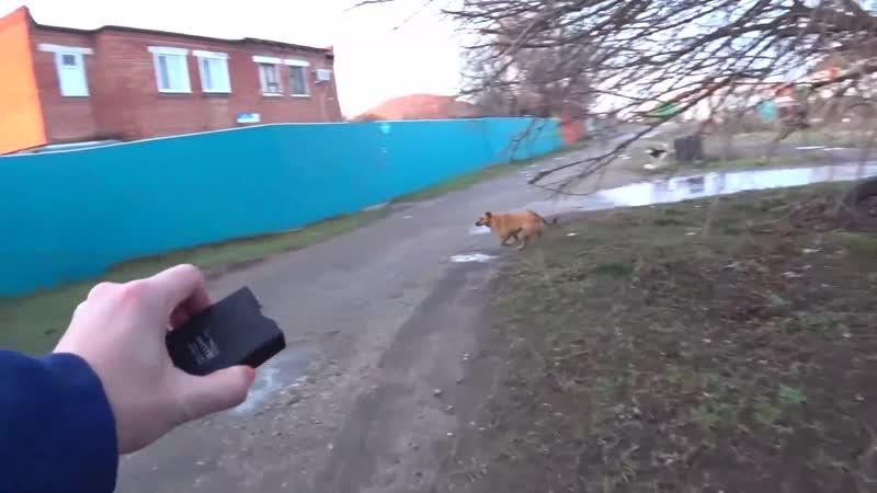 Защита шокером от агрессивных бродячих собак