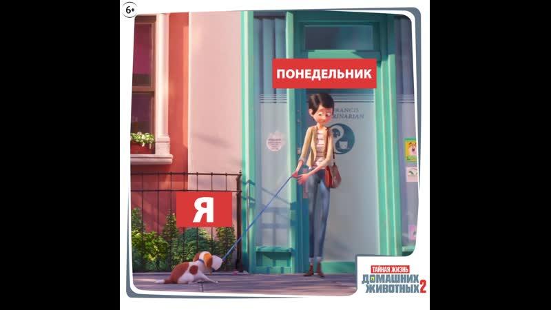 SP2_GIF_MONDAY_1x1_OV_EN_TEXTED_mov_ru