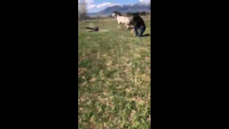 Испуг лошадей