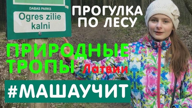 Прогулка по лесу природные тропы Латвии Огрские Синие Горы Ogres Zilie Kalni