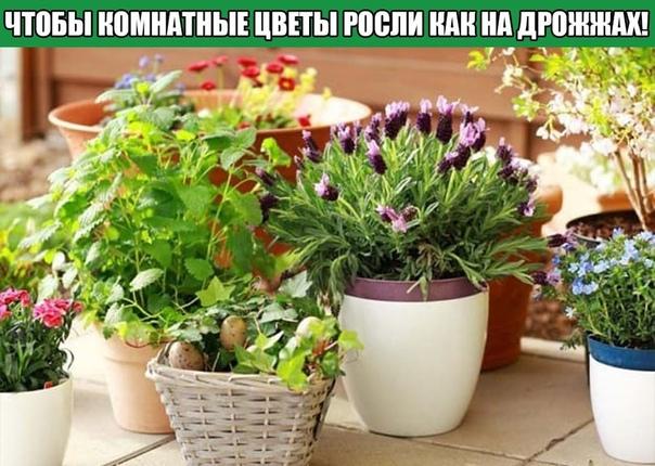 Всего 7 приемов, чтобы комнатные цветы росли как на дрожжах!!!