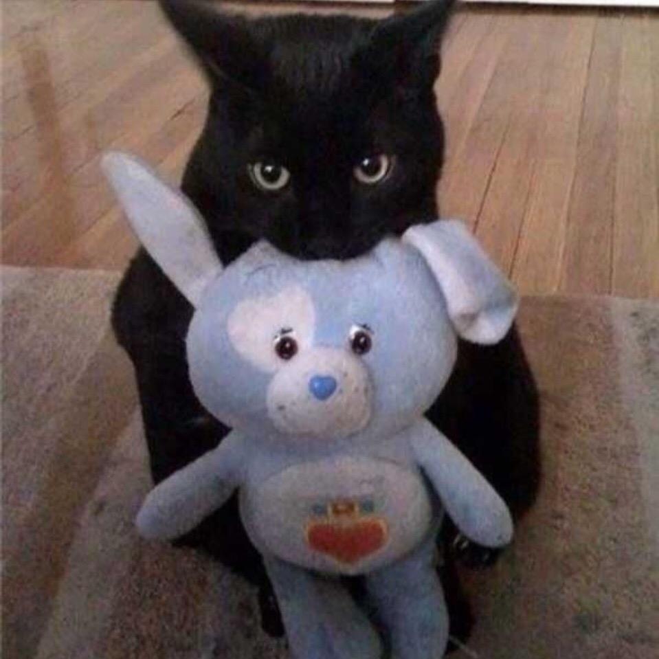 Большие котики и маленькие котики