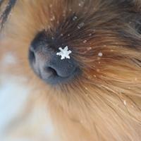 Фотография профиля Олечки Пранович ВКонтакте