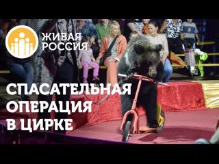Живая Россия  Спасательная операция в цирке