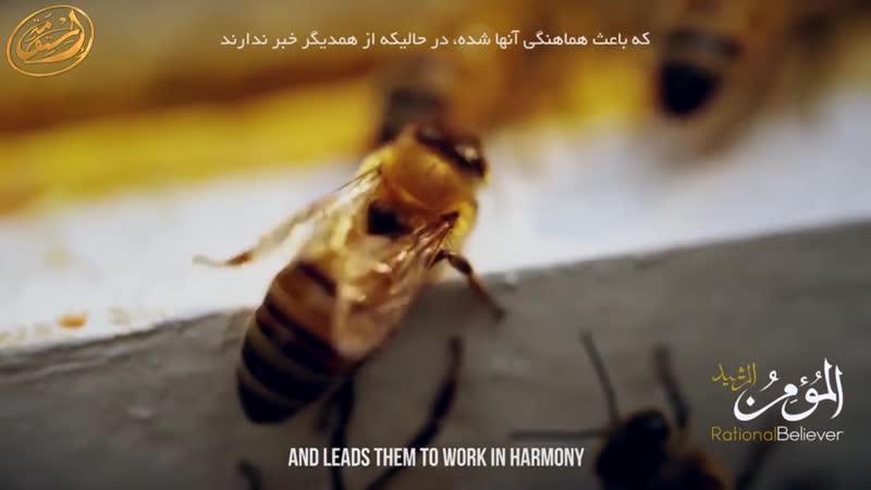 Медовые пчелы удивительная архитектура чудеса Корана