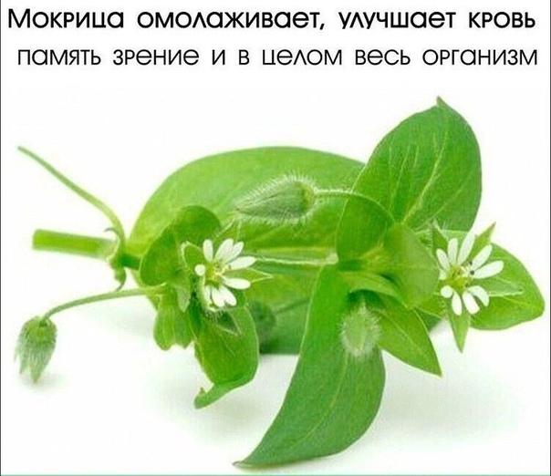 Эликсир ЖИЗНИ