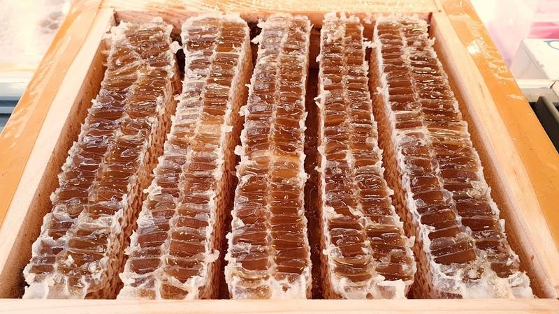 달콤한 천연 벌꿀 아이스크림 붕어빵 인사동 길거리 음식 Oreo Honey ice cream fish shaped bun 魚パ 12531