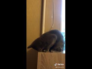 Как научить кошку разговаривать