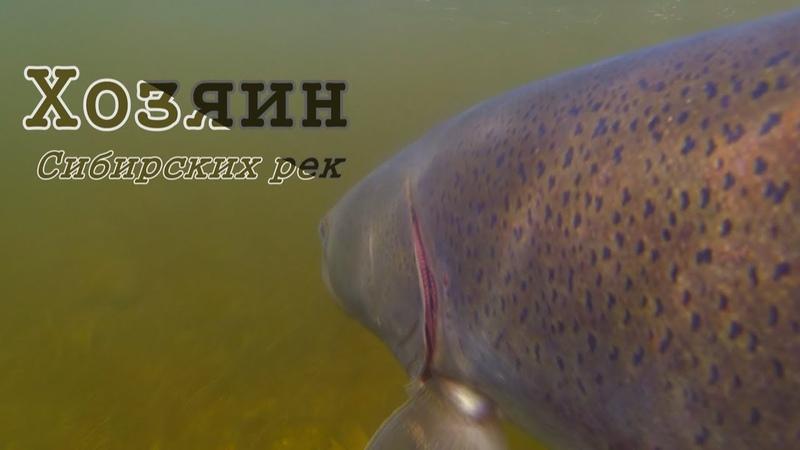Самая опасная рыба Сибирских рек Подводная съемка Рыбалка в Тыве 5 Горное озеро щука окунь таймень